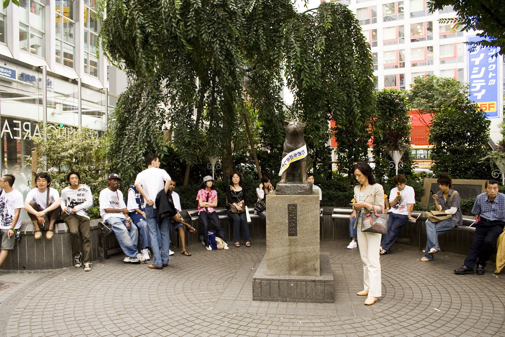 Real Hachiko Pictures
