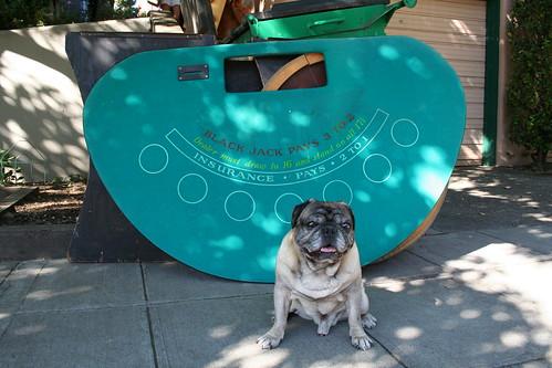 Pug with Blackjack Table
