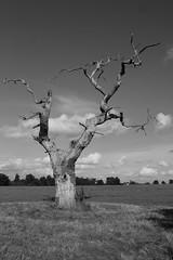 dead tree photo by captainmcdan