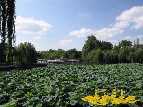 荷花池公园2