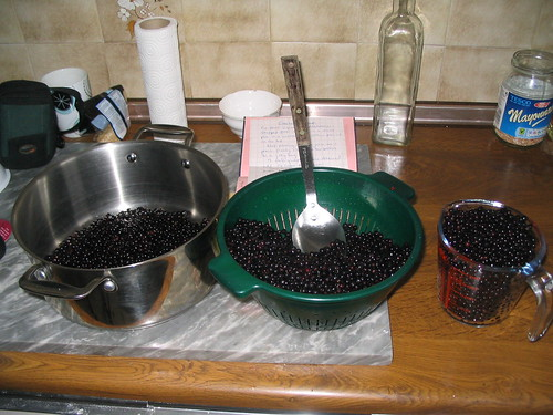 Elderberries 1