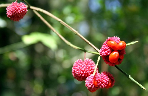 Funky Red Berries
