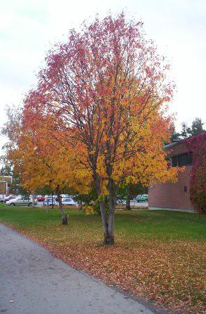 Árbol con diferentes tonos