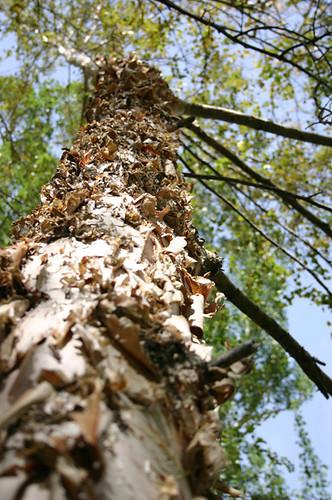 Crumbly Tree