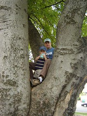 In a tree with dad and vanilla soymilk