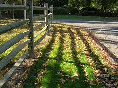 Fence with fall leaves