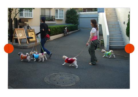 dogs_tee_shirts