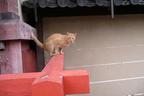 鈍くさい猫?