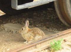 The CRM bunny