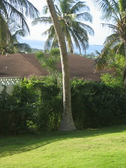 Carib view from yard 2