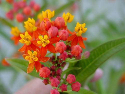 Mystery Flower 2