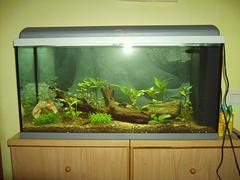 Aquari amb plantes amb flaix