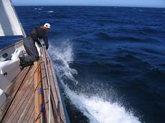 Bori calling porpoise