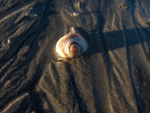 The last seashell of summer