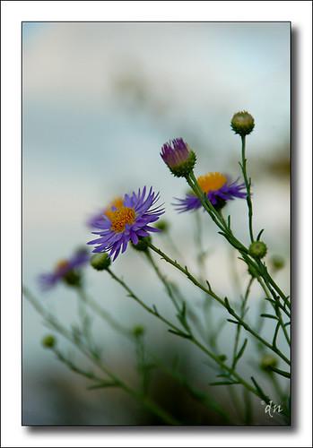 WhiteSands Wild flower