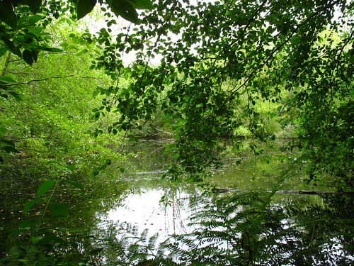 pond 1