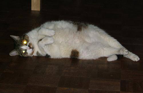 Cat obedience school edmonton