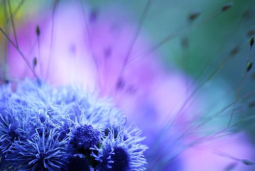 hue blue