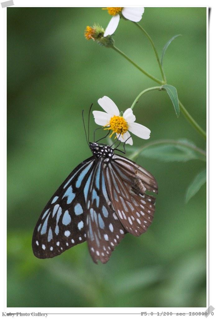 蝴蝶和昆蟲