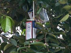 Strange Fruit (2)