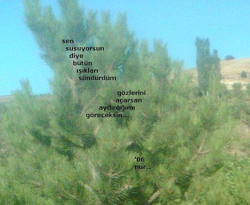 nur, şiir