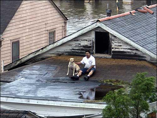 Katrina's Canine Victims 0006