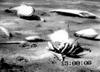 peces muertos eutrofizacion