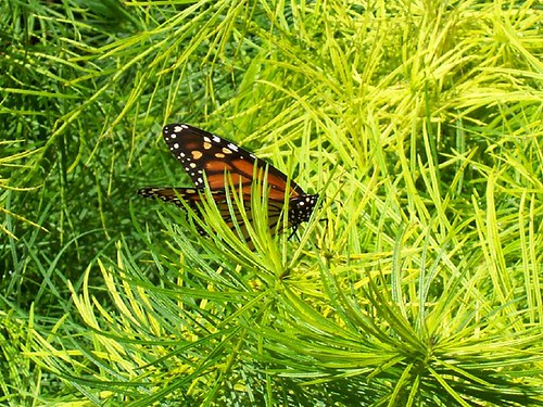 Nature Realm Butterfly
