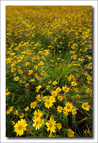 wild flowers at sandia 4