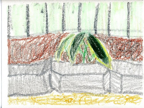 Plants with Oil pastel