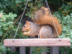 7  todays squirrel