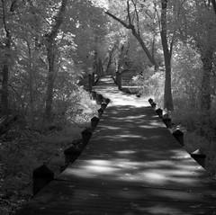 Roosevelt Island Swamp Walkway
