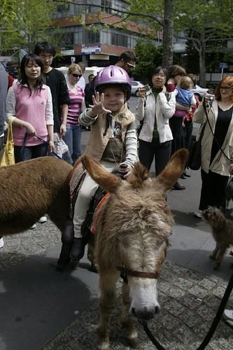 人与动物是永远的朋友 奥克兰动物大游行纪实