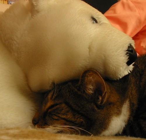 Napkin und Mr. Bear