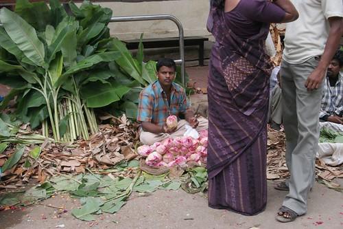 IMG_0186 Lotus buds for sale, varalakshmi puja