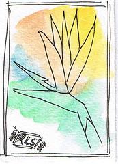 Floral ATC 1