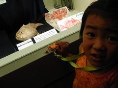 千葉県立中央博物館 企画展 深海のおさかな