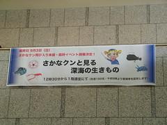 千葉県立中央博物館 さかなくんがきてた!