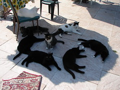 Cat Conspiracy photo by Tjflex2
