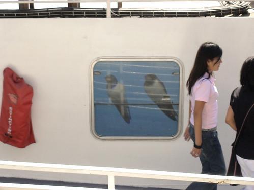 bateau mouche2