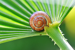 snail fan photo by Rosina