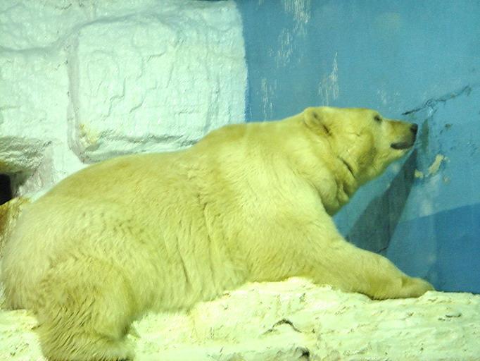 北极动物张嘴图