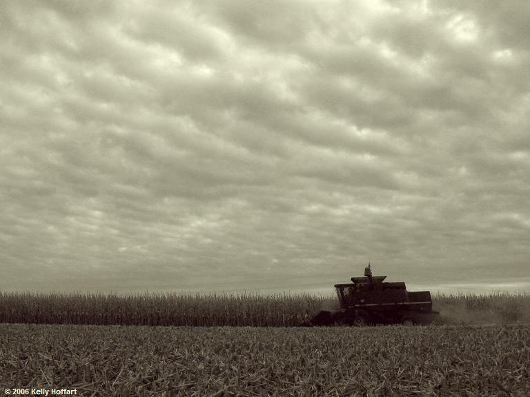 Harvesting Corn I