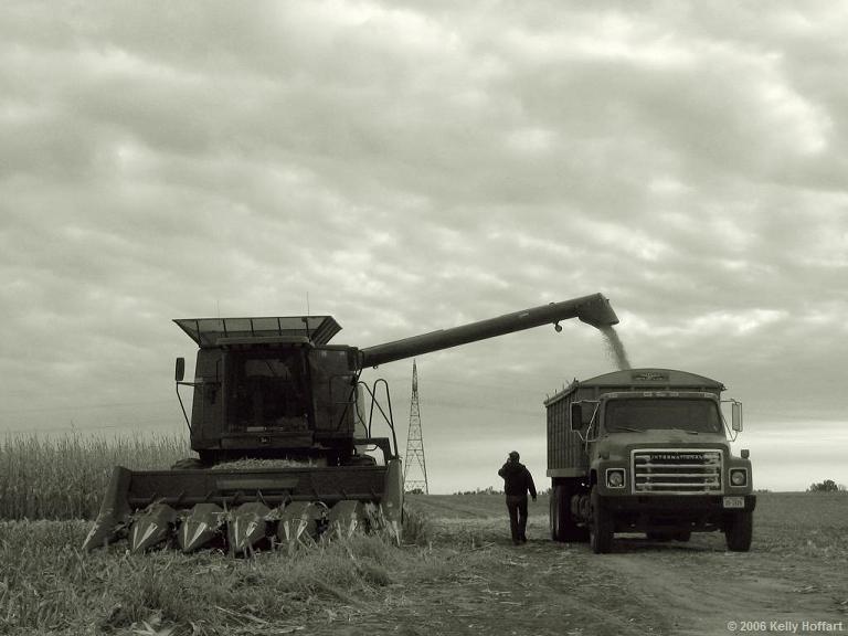 Harvesting Corn II