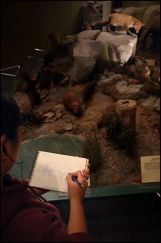 Sketching Fox