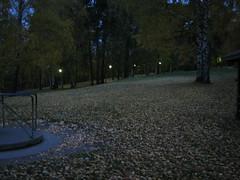 Autumn morning, 8 am.