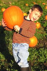tse's pumpkin pick