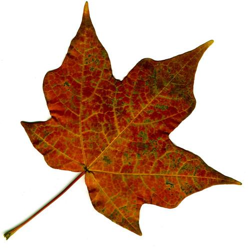 Golden-Leaf.jpg