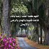 42161194700_ab32b46f02_t