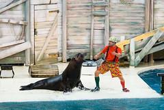 Mens met zeeleeuw